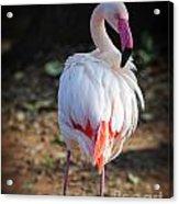 Flamingo In Fuchsia Acrylic Print
