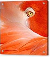 Flamingo Eye Acrylic Print