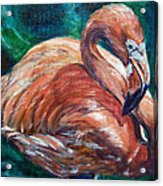 Flamingo Flare Acrylic Print