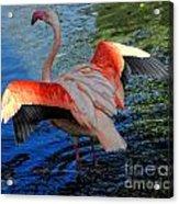Flamingo Flight Acrylic Print