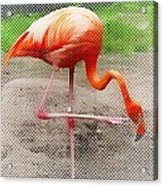Flamingo Four Acrylic Print
