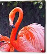 Flamingo In The Wild Acrylic Print