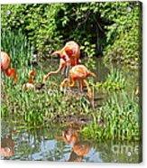 Flamingo Island Acrylic Print