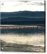 Flamingo Lake Acrylic Print