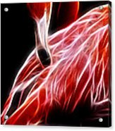 Flamingo Portrait Fractal Acrylic Print
