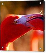 Flamingo-profile Acrylic Print by Angelika Sauer