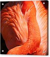 Flamingo Resting Acrylic Print
