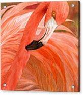 Flamingo - Spirit Of Balance Acrylic Print