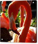 Flamingo Acrylic Print by Tammy Wallace