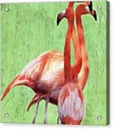 Flamingo Twist Acrylic Print by Jeff Kolker