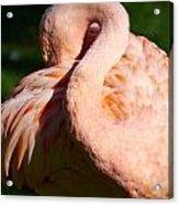 Flamingo Twist Acrylic Print