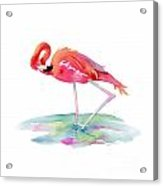 Flamingo View Acrylic Print