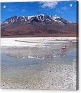 Flamingos At The Altiplano In A Salt Lake Acrylic Print