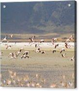 Flamingos Flying Over Water Acrylic Print