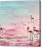 Flamingos In Camargue 03 Acrylic Print