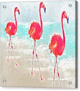 Flamingos On The Beach Acrylic Print