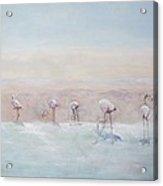 Flamingos Peru Acrylic Print