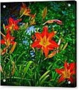 Flashes Of Garden Fire Acrylic Print