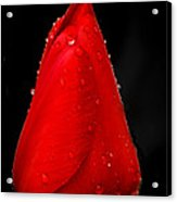 Floating Red Tulip Acrylic Print