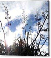 Flax Light Acrylic Print