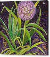 Fleur D Allium With Iris Leaves Backup Acrylic Print
