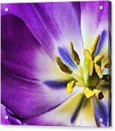 Fleur Viii Acrylic Print
