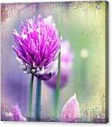 Fleurs De Oboulette Acrylic Print