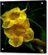 Fleurs Jaunes Acrylic Print
