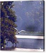 Flight Above Water IIi Acrylic Print