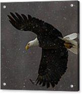 Flight In Snow Acrylic Print