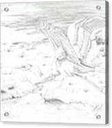 Flight Of Grace Acrylic Print