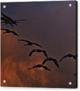 Flight Of The Cranes Acrylic Print