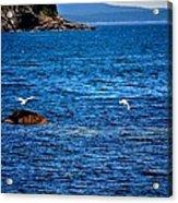Flight Of The Seagulls Acrylic Print