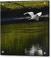 Flight Over Pond Acrylic Print