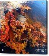 Floating Algae Acrylic Print