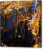 Floating Gold Acrylic Print