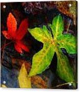 Floating Green Leaf Acrylic Print