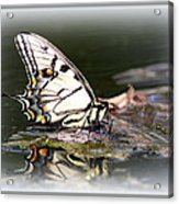 Floating In Water - Swallowtail -butterfly Acrylic Print