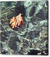 Floating Leaf Acrylic Print