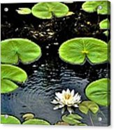 Floating Lily Acrylic Print
