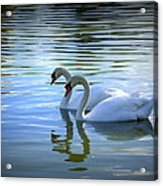 Floating On Glass Acrylic Print by Laurie Perry