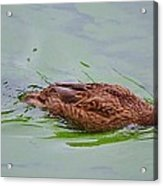 Floating On Green Acrylic Print