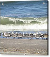 Flock And Wave Acrylic Print