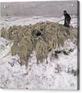 Flock Of Sheep In The Snow Acrylic Print