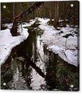 Flooding Forest Acrylic Print