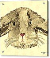Floppy Bunny Acrylic Print