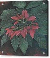 Flor De Pascua Acrylic Print by Maurice Dilan
