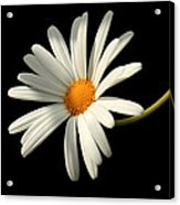Flora 1 Acrylic Print
