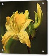 Flora 3 Acrylic Print