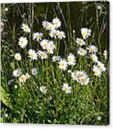 Flora And Fauna Acrylic Print